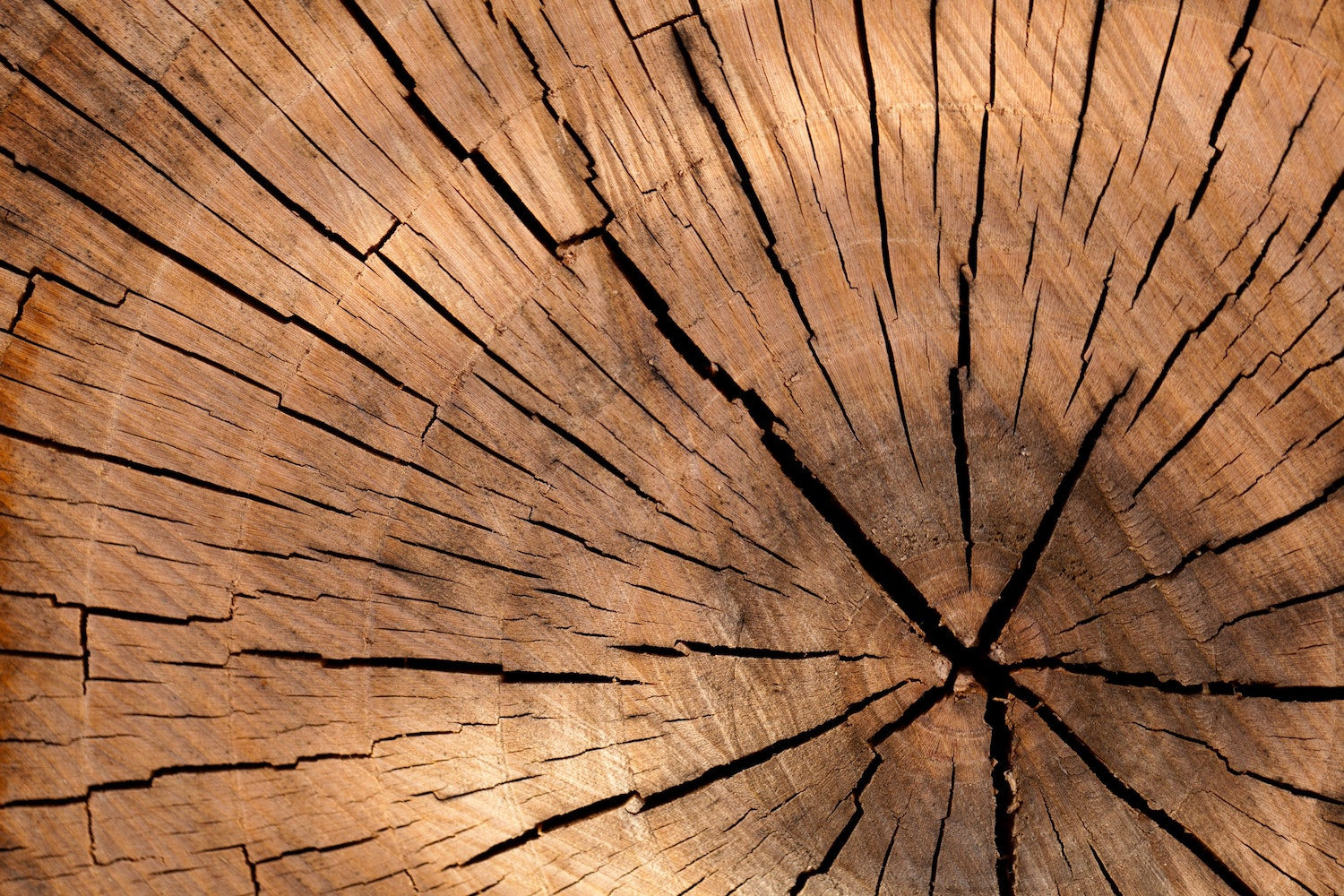 tree rings close up