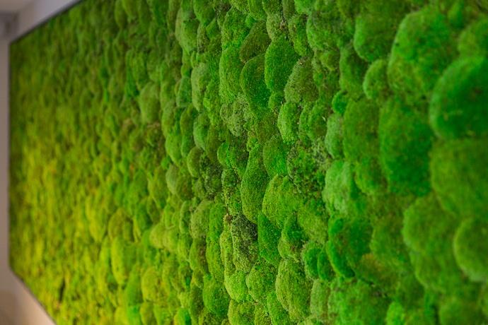 norse harrogate interior moss wall