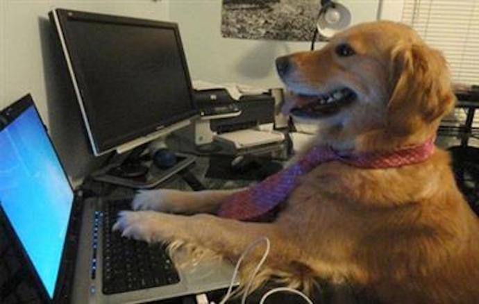 dog happily using laptop wearing tie